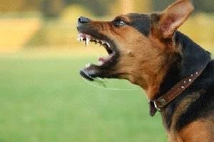 Μην εξαγριώνετε το γκρι σκύλο πλησίον του διοικητηρίου