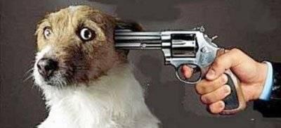 Πυροβόλησε σκύλο επειδή τον ενοχλούσε