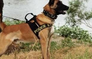 Καβάλα : 24χρονος συνελήφθη μέσα στο σπίτι του - Ο Αστυνομικός σκύλος μύρισε την κάνναβη