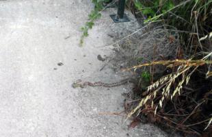 Οι πολίτες δεν φωτογραφίζουν μόνο τα χόρτα που δεν κόπηκαν αλλά και τα φίδια που βγαίνουν από αυτά !