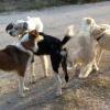 Ο Δήμος Καβάλας προγραμματίζει στειρώσεις για περίπου 80 αδέσποτα ζώα