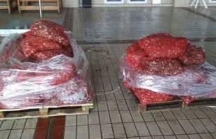 Σύλληψη στην Καβάλα για έναν τόνο οστράκων ακατάλληλων προς κατανάλωση