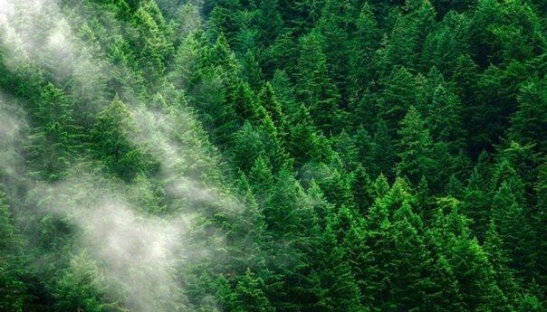 Τα αισθητικά δάση της χώρας - Στην λίστα το δάσος του Νέστου και του Αμυγδαλεώνα
