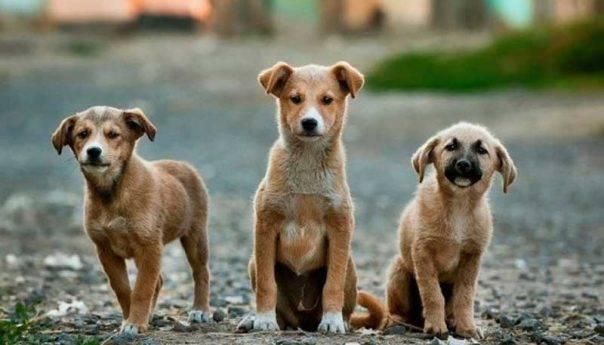 Δημιουργία βάσης δεδομένων δεσποζόμενων και αδέσποτων σκύλων Δήμου Θάσου