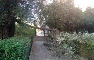 Ένα μεγάλο κλαδί δέντρου έπεσε στην είσοδο της Νομαρχίας (φωτογραφία)