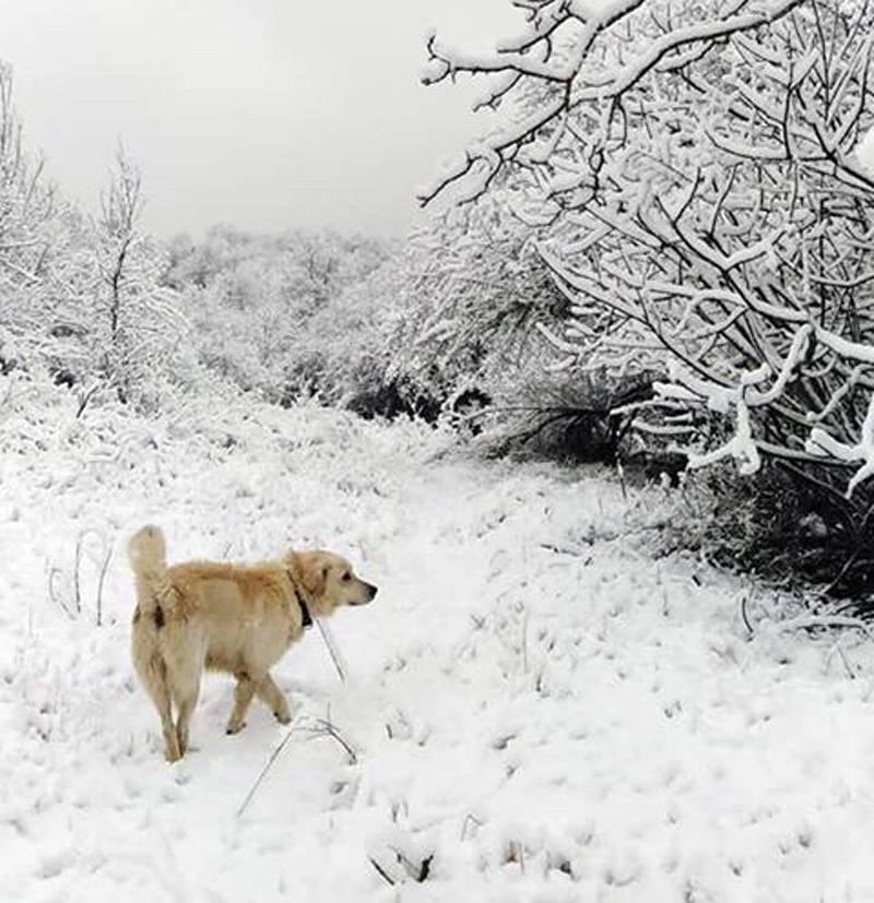 Χιόνια και στο Λυκόστομο (φωτογραφία)