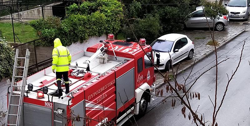 Πυροσβέστες απελευθέρωσαν γάτα που είχε εγκλωβιστεί σε δέντρο