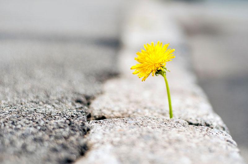 Σημασία δεν έχει πόσες φορές θα πέσουμε αλλά πόσες φορές θα σηκωθούμε και θα συνεχίσουμε …