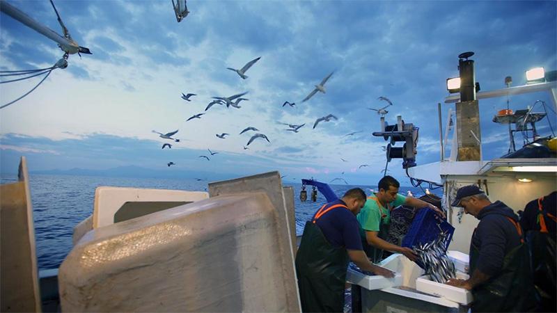 «Σιγή ιχθύος»: Το ντοκιμαντέρ για τη Μεσόγειο περνάει (και) από την Καβάλα (video)