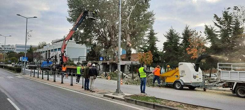Ο Δήμος Καβάλας κλαδεύει επικίνδυνα δέντρα (φωτογραφίες)