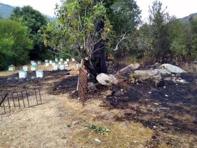 Πυρκαγιά κοντά στη Μουσθένη (φωτογραφία – video)